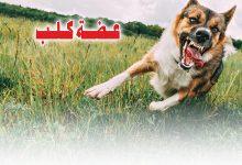 Photo of عـضــة كـلــــب